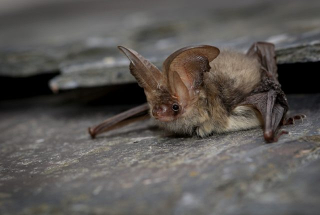 Bats in the Heart of the National Forest