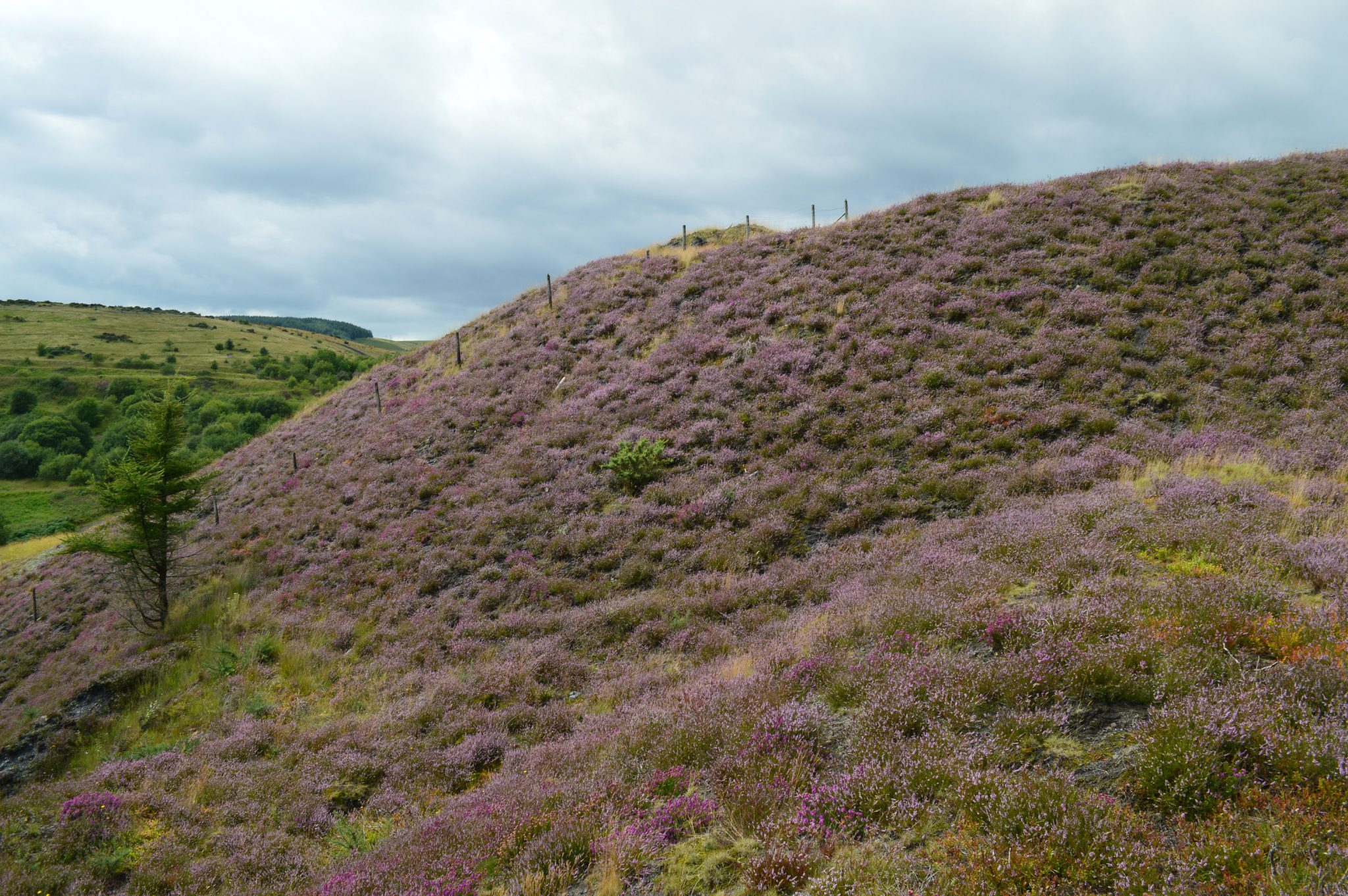 Reclaimed spoil heap in South Wales