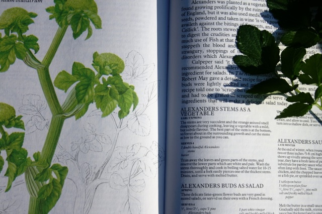 Photo of a book with information about the Alexander plant, a diagram and an actual plant placed over the top.