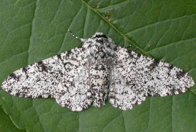 Moths & the Landscape