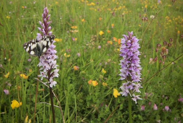 Wildflower Identification for Beginners