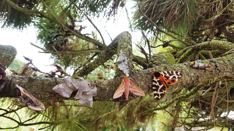 Photo of a branch with five different species of butterfly resting