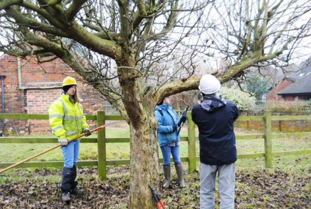 Orchard Pruning Course