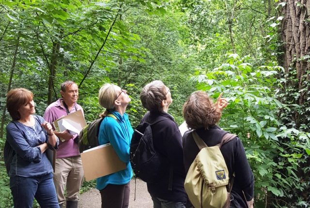 Tree Health Talk