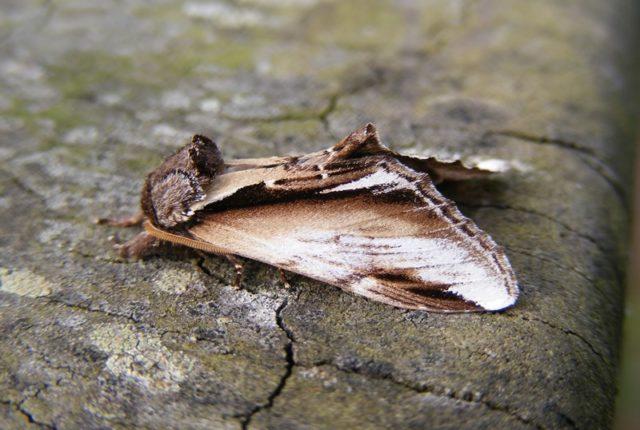 Moth Trap Release
