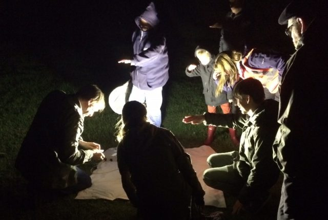 Bat Walk & Moth Trapping Evening