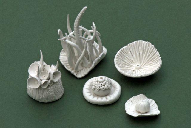 Lichens & Plants : Clay Workshop